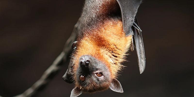 NABU Holzminden: Fledermaus-Wochenende fällt aus!