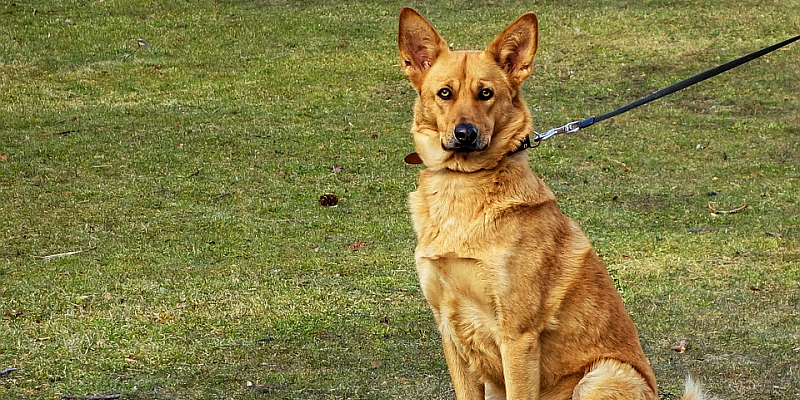 Ab April: Hunde müssen an die Leine - Wildtiere brauchen Ruhe in der Brut- und Setzzeit