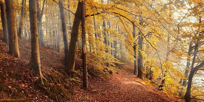 Waldzustandserhebung 2019: Nur jeder fünfte Baum in NRW ohne Schäden