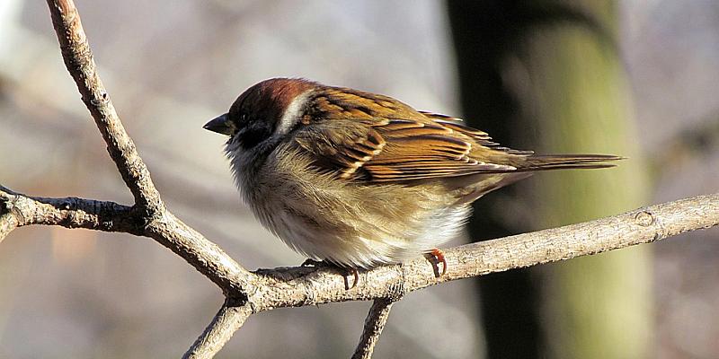 NABU: Rekordbeteiligung bei der Stunde der Wintervögel zeichnet sich ab | Aber: Weniger gefiederte Gäste in Gärten und Parks