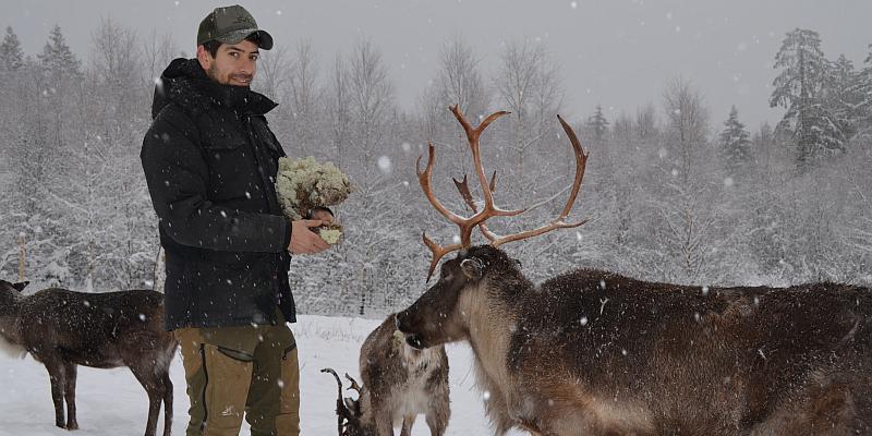Skandinavien für kurze Zeit: Rentier-Erlebnistouren durch die Solling-Vogler-Region im Weserbergland