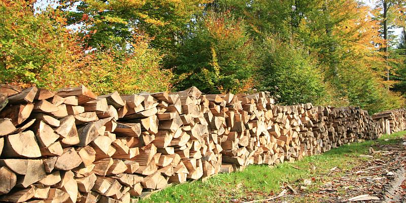 Forstamt Dassel: Brennholz für 2021 ab sofort schriftlich bestellen
