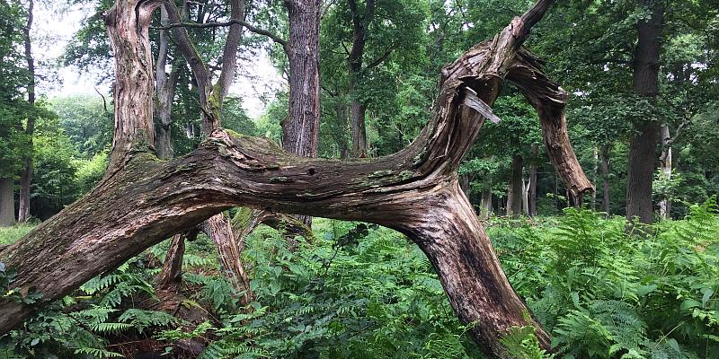 Unser Solling: Waldwanderung am 6. September in Norddeutschlands zweitgrößtem Waldgebiet