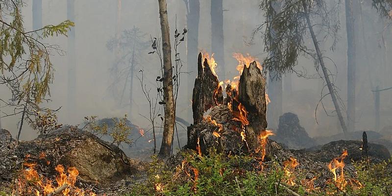 Waldbrandgefahr: Wegen großer Trockenheit warnt der Landkreis
