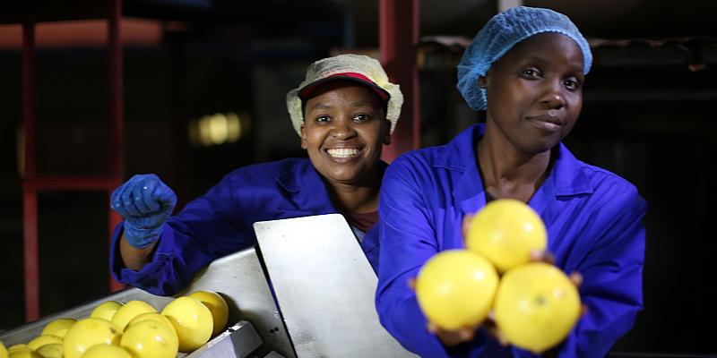 Südafrika: Symrise fördert den nachhaltigen Anbau weißer Grapefruit in KwaZulu-Natal