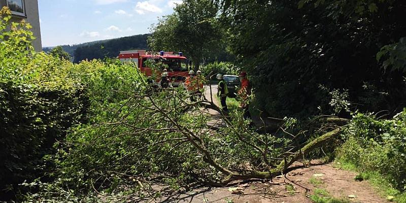 Umgestürzter Baum führt zu Feuerwehreinsatz in Grünenplan