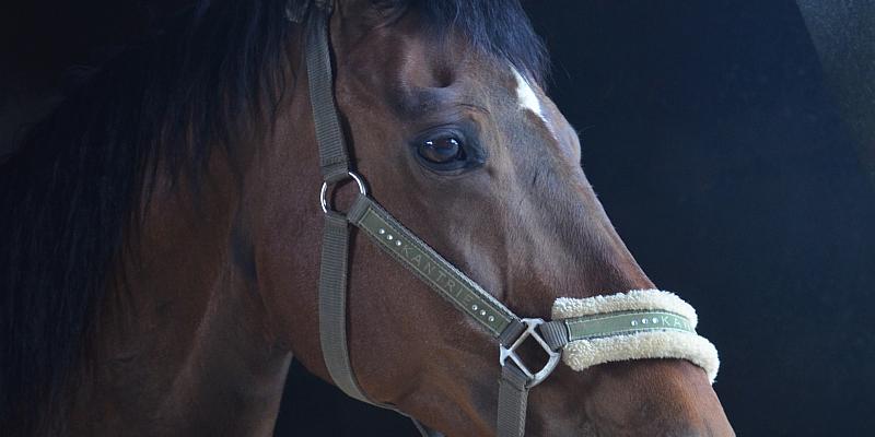 Vermutlicher Pferdediebstahl mit Todesfolge - Zeugen und Unfallfahrer gesucht
