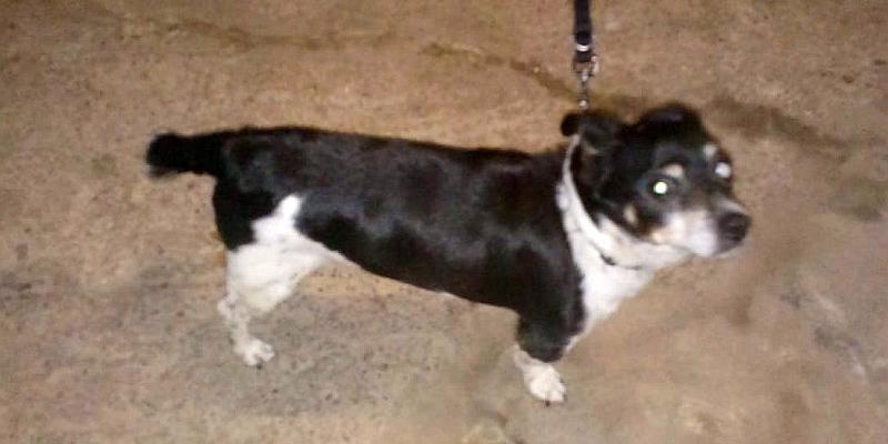 Terrier-Mix sucht neues Zuhause - UPDATE: Der Hund wurde vermittelt!