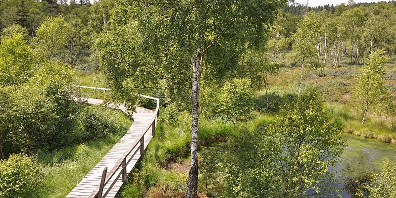Einblicke in einzigartige Natur: Führungen durch das Hochmoor Mecklenbruch im Forstamt Neuhaus