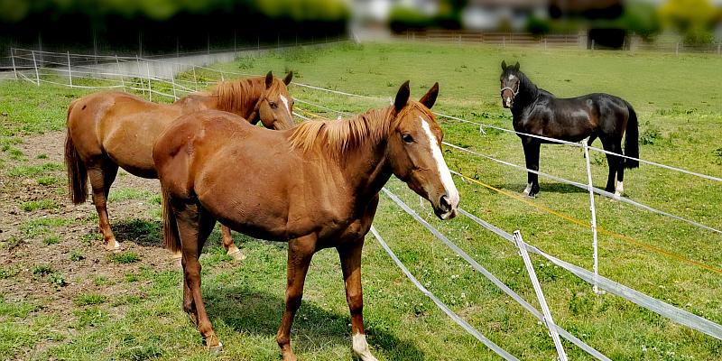 Neues Zuhause für gepeinigte Pferde gesucht