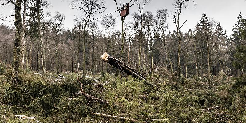 Klimaschutz: Landesforsten drücken bei der Moorrenaturierung aufs Tempo  Im Solling müssen Fichten weichen, damit Torf wachsen kann