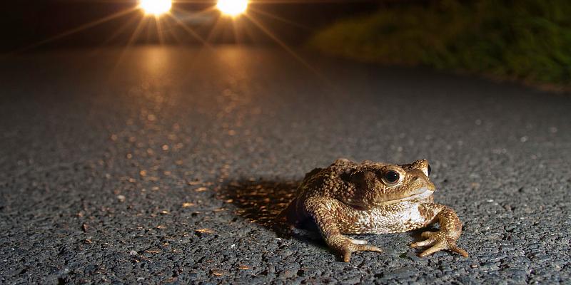 NABU: Amphibienwanderung beginnt früher