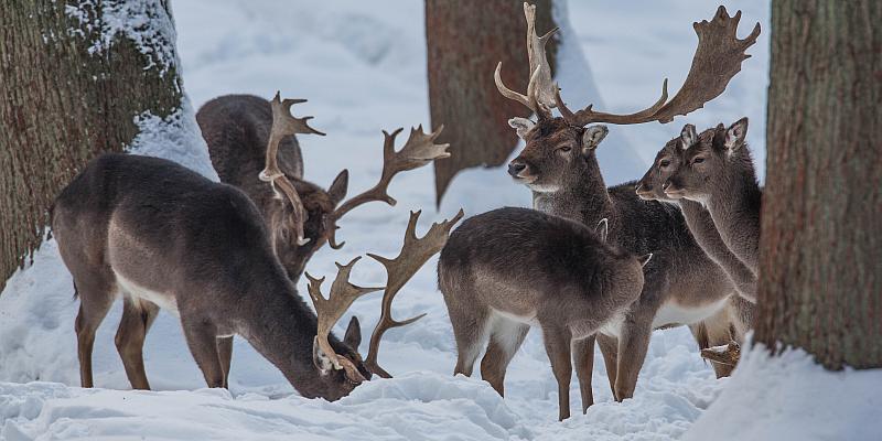 Wildtiere im Winter: Geführte Entdeckungs- und Beobachtungstour im Wildpark Neuhaus