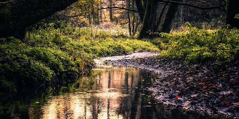 Bach im Fluss: Gewässerwettbewerb geht in die sechste Runde