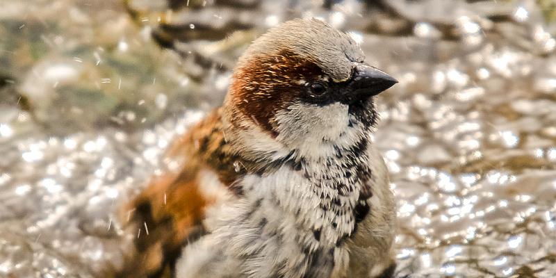 Welche Vögel sind noch da? NABU und NAJU rufen zur Wintervogelzählung auf