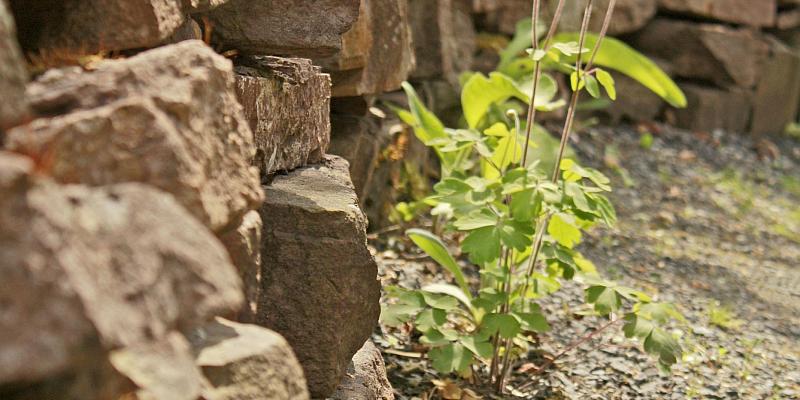 Gärtnern mit der Natur: Abendkurs der Kreisvolkshochschule Holzminden