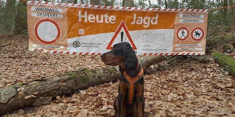 Vollsperrung: Jagd in den Wäldern zwischen Eschershausen, Silberborn und Relliehausen