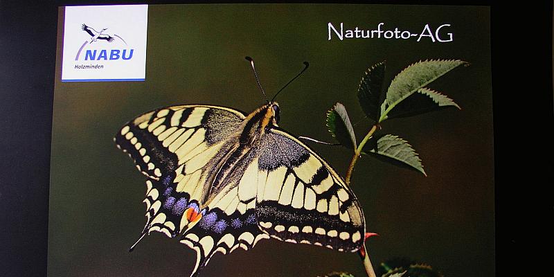NABU-Naturfotokalender für 2020 erschienen