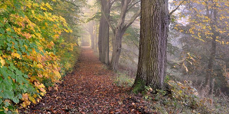 Wilder Wander- und Radfahrspaß: Aktiv in der herbstlichen Solling-Vogler-Region im Weserbergland