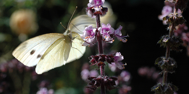"""Mitmach-Projekt """"Insektensommer"""" startet - Naturfreunde zählen, was sechs Beine hat"""